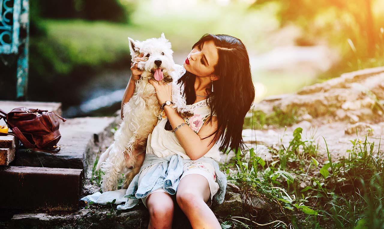 banner-perro